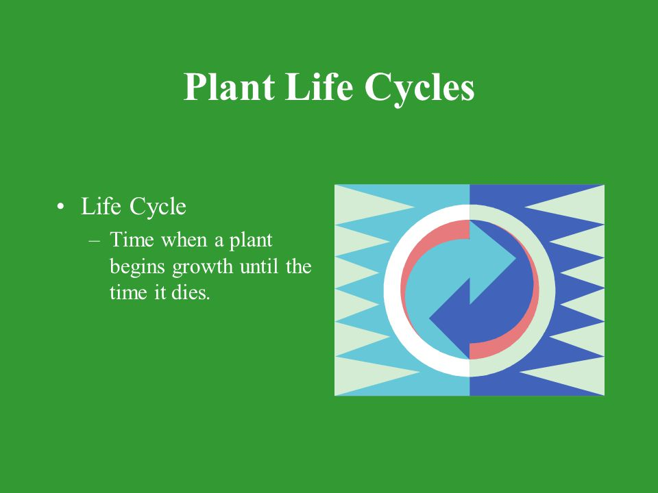 Plant Life Cycles 3 groups –Annuals Complete their life cycle within one year.