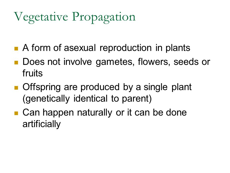Vegetative Propagation A form of asexual reproduction in plants Does not involve gametes, flowers, seeds or fruits Offspring are produced by a single plant (genetically identical to parent) Can happen naturally or it can be done artificially