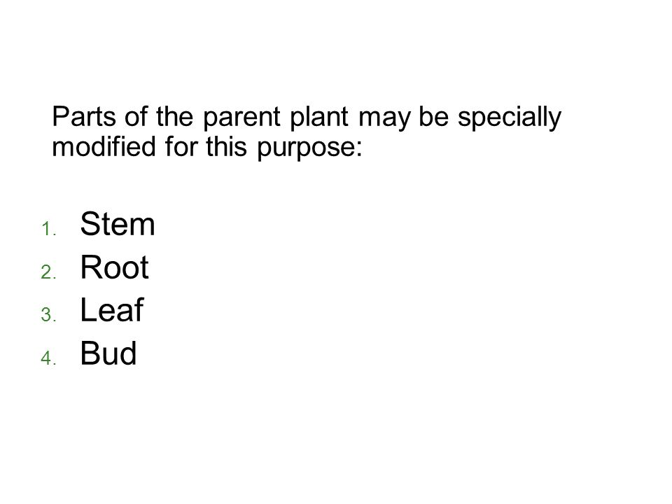 Parts of the parent plant may be specially modified for this purpose: 1. Stem 2. Root 3. Leaf 4. Bud