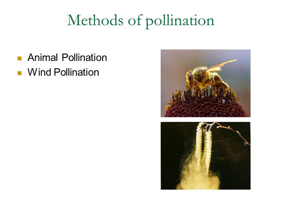 Methods of pollination Animal Pollination Wind Pollination