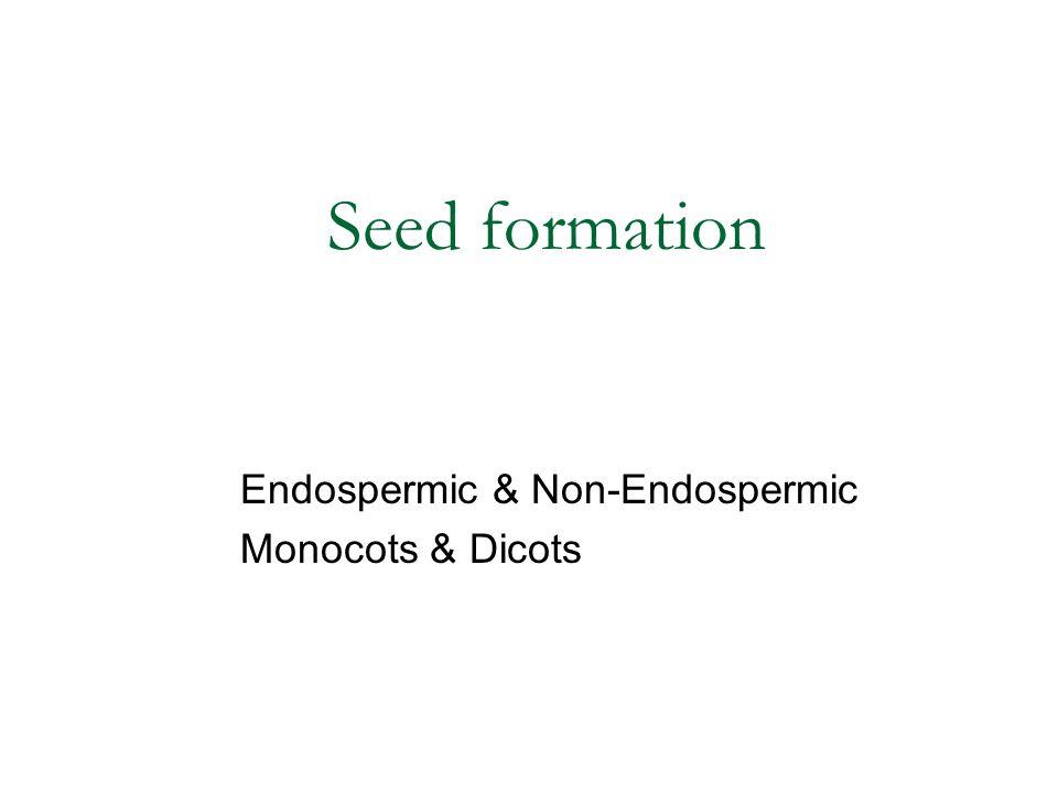 Seed formation Endospermic & Non-Endospermic Monocots & Dicots