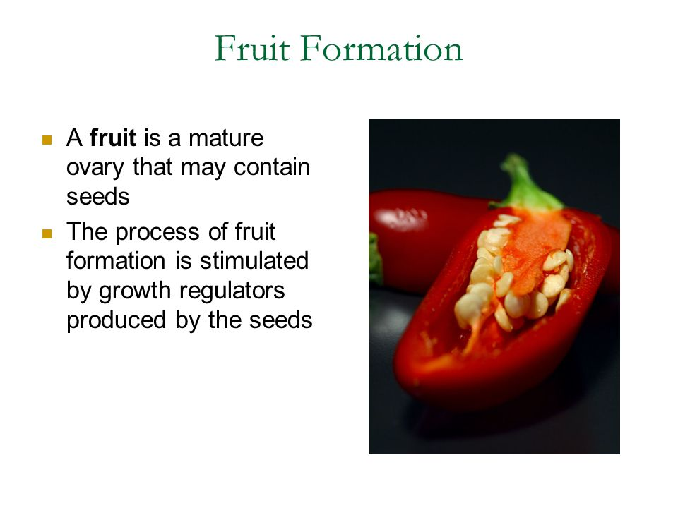 Fruit Formation A fruit is a mature ovary that may contain seeds The process of fruit formation is stimulated by growth regulators produced by the see