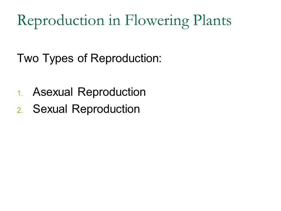 Reproduction in Flowering Plants Two Types of Reproduction: 1. Asexual Reproduction 2. Sexual Reproduction