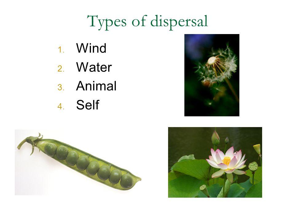 1. Wind 2. Water 3. Animal 4. Self Types of dispersal