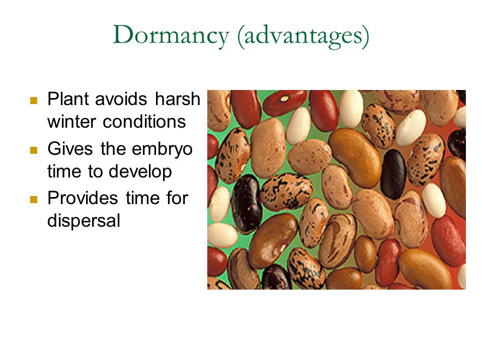 Dormancy (advantages) Plant avoids harsh winter conditions Gives the embryo time to develop Provides time for dispersal