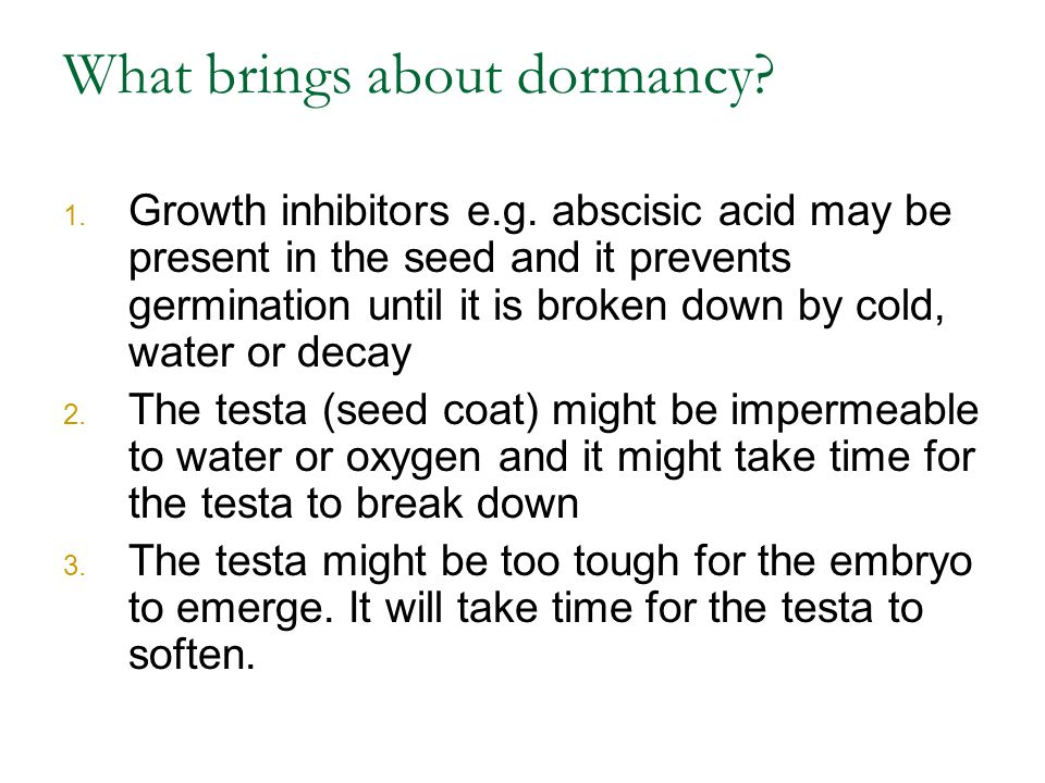 What brings about dormancy? 1. Growth inhibitors e.g. abscisic acid may be present in the seed and it prevents germination until it is broken down by
