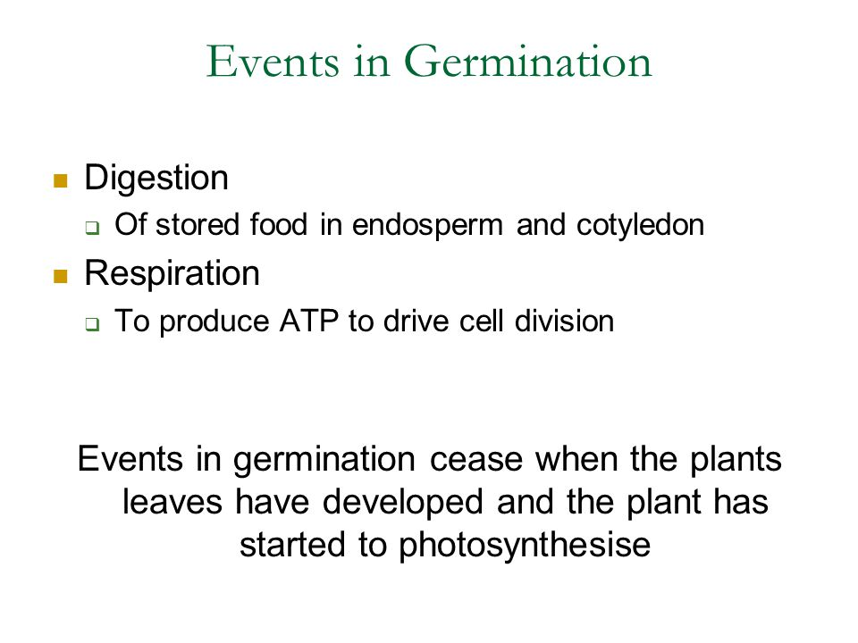 Events in Germination Digestion  Of stored food in endosperm and cotyledon Respiration  To produce ATP to drive cell division Events in germination cease when the plants leaves have developed and the plant has started to photosynthesise