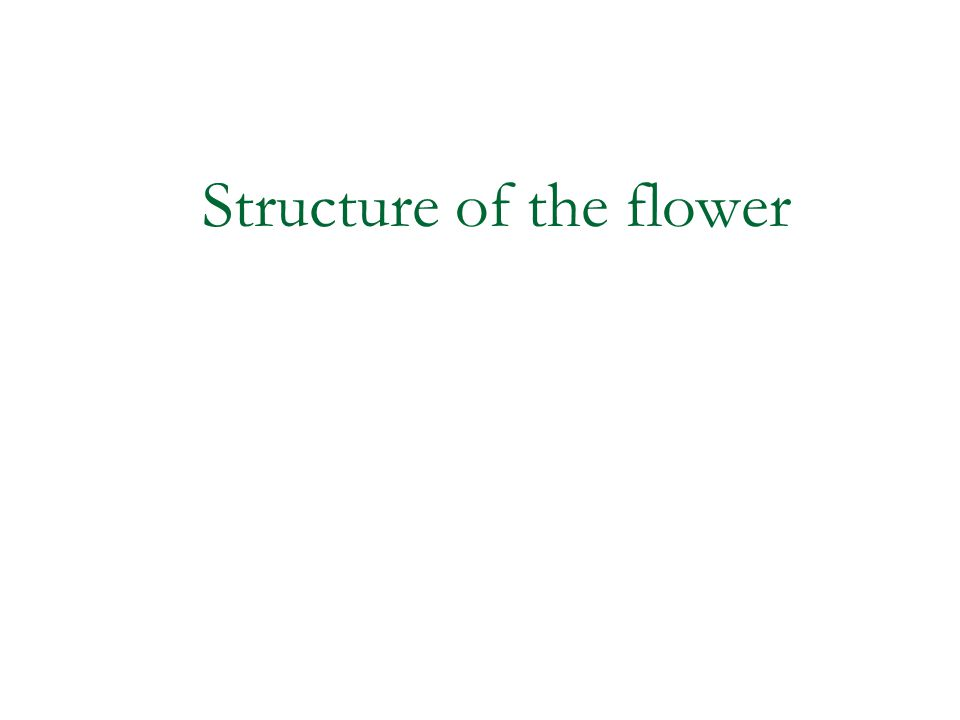 Structure of the flower