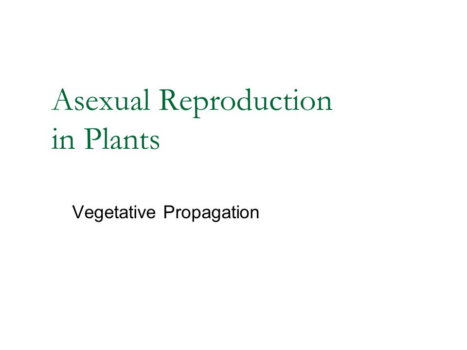 Asexual Reproduction in Plants Vegetative Propagation