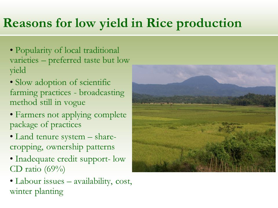 Strategy to increase Rice production (Increase Productivity) Increase SRR (HYV, Hybrids) Breeding varieties with acceptable taste, aroma and with higher yields – IRRI assistance Improved cultivation practices – transplanting, SRI demonstration, prescribed package of practices Tackling iron toxicity, acidity - STRASA