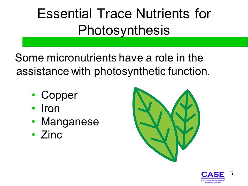 6 Micro Effect Involving Enzymes The following micronutrients influence the reaction of enzymes needed for plant metabolism and function: Copper Manganese Molybdenum Zinc
