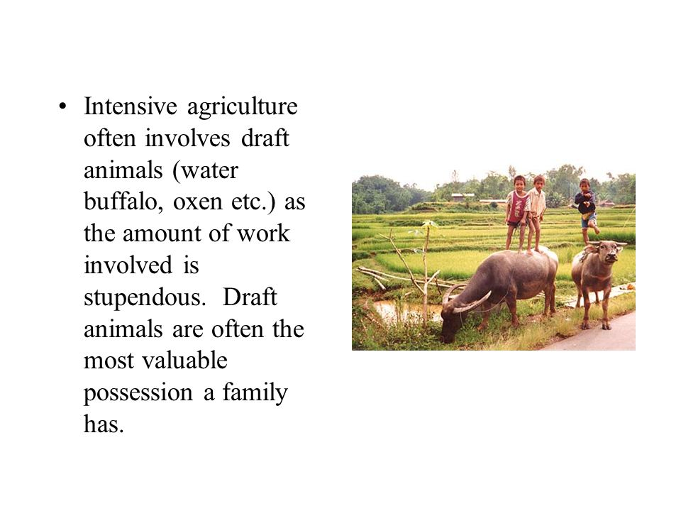 Intensive agriculture often involves draft animals (water buffalo, oxen etc.) as the amount of work involved is stupendous.