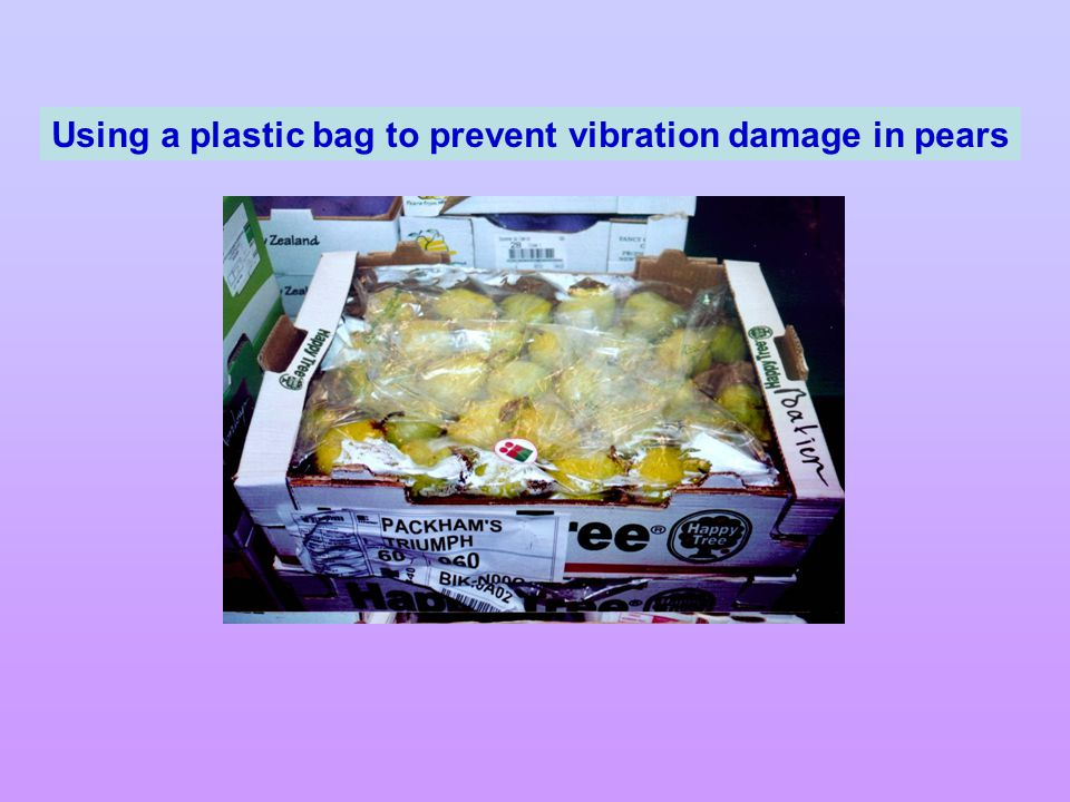 Using a plastic bag to prevent vibration damage in pears