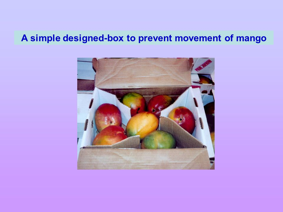 A simple designed-box to prevent movement of mango