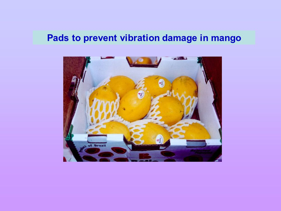 Pads to prevent vibration damage in mango