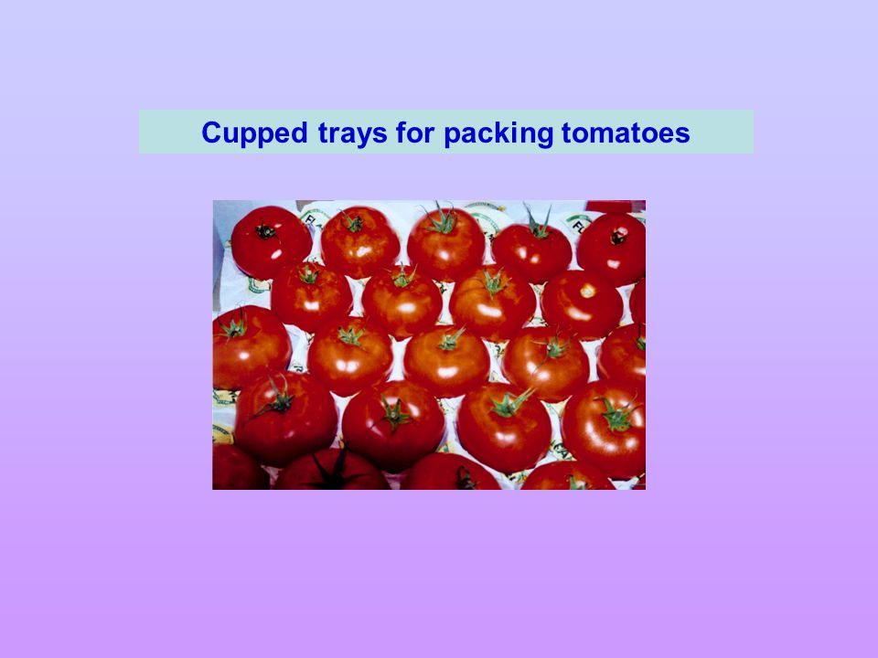 Cupped trays for packing tomatoes