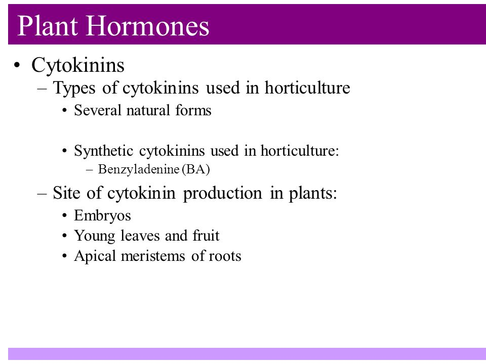 Plant Hormones Cytokinins –Types of cytokinins used in horticulture Several natural forms Synthetic cytokinins used in horticulture: –Benzyladenine (BA) –Site of cytokinin production in plants: Embryos Young leaves and fruit Apical meristems of roots