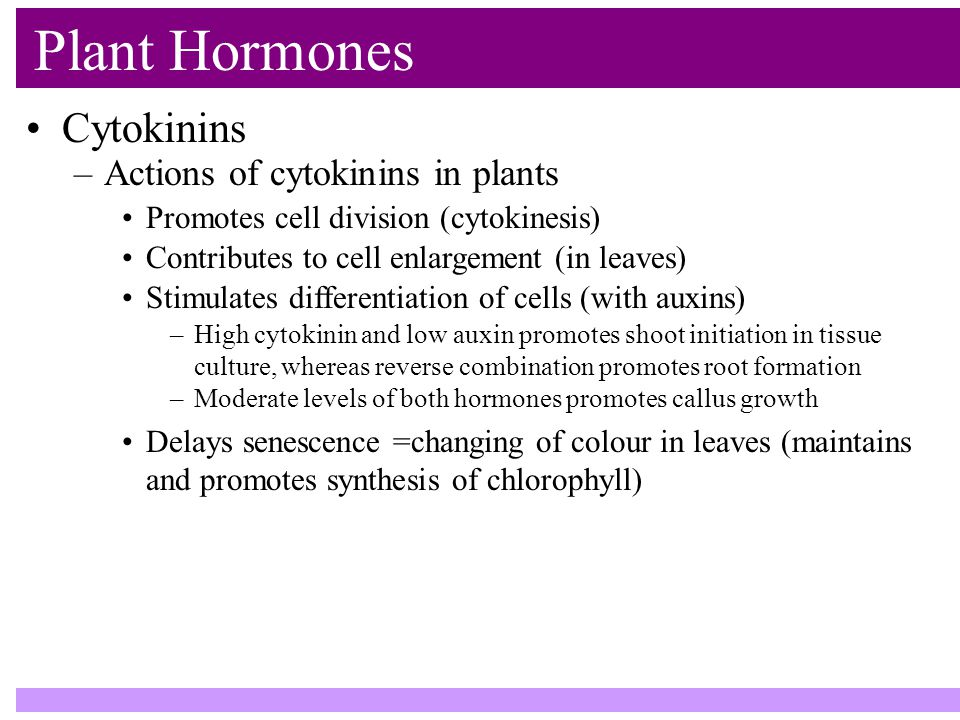 Plant Hormones Cytokinins –Actions of cytokinins in plants Promotes cell division (cytokinesis) Contributes to cell enlargement (in leaves) Stimulates differentiation of cells (with auxins) –High cytokinin and low auxin promotes shoot initiation in tissue culture, whereas reverse combination promotes root formation –Moderate levels of both hormones promotes callus growth Delays senescence =changing of colour in leaves (maintains and promotes synthesis of chlorophyll)