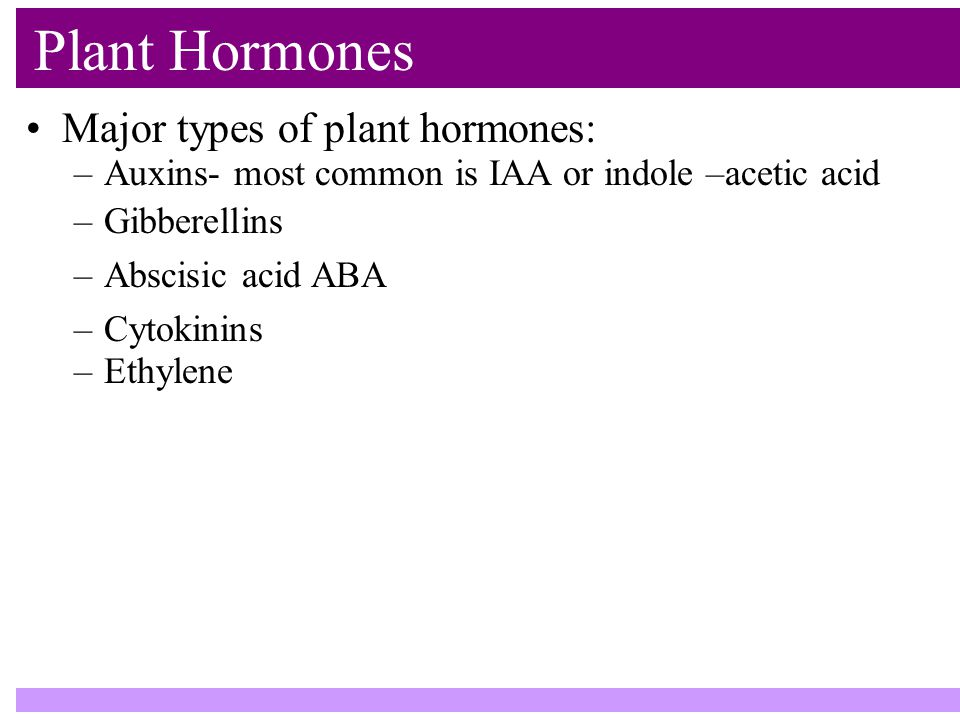 Plant Hormones Major types of plant hormones: –Auxins- most common is IAA or indole –acetic acid –Gibberellins –Abscisic acid ABA –Cytokinins –Ethylene