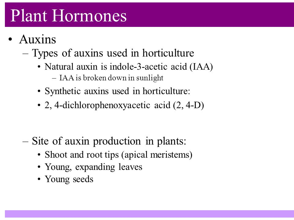Plant Hormones Auxins –Types of auxins used in horticulture Natural auxin is indole-3-acetic acid (IAA) –IAA is broken down in sunlight Synthetic auxins used in horticulture: 2, 4-dichlorophenoxyacetic acid (2, 4-D) –Site of auxin production in plants: Shoot and root tips (apical meristems) Young, expanding leaves Young seeds