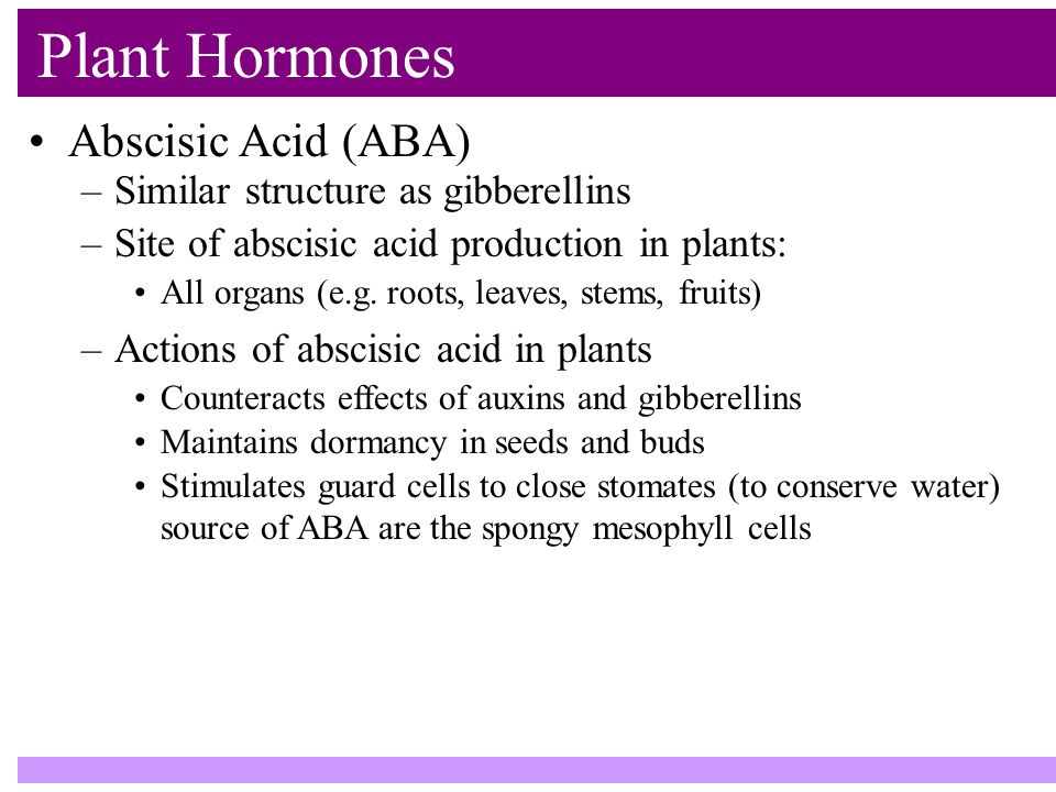 Plant Hormones Abscisic Acid (ABA) –Similar structure as gibberellins –Site of abscisic acid production in plants: All organs (e.g.