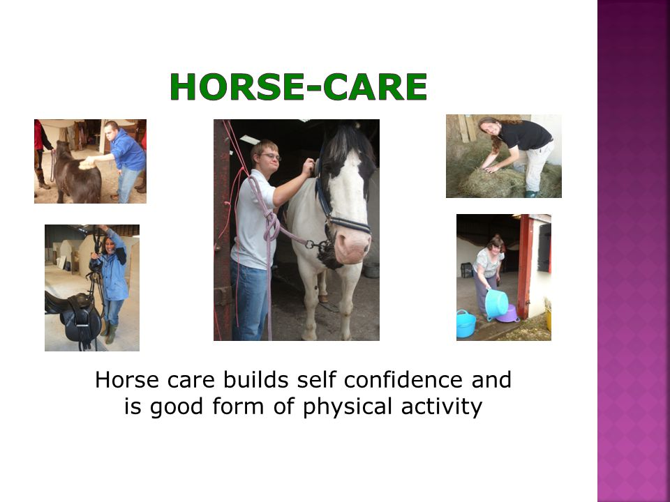 Horse care builds self confidence and is good form of physical activity