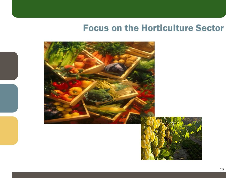 10 Focus on the Horticulture Sector