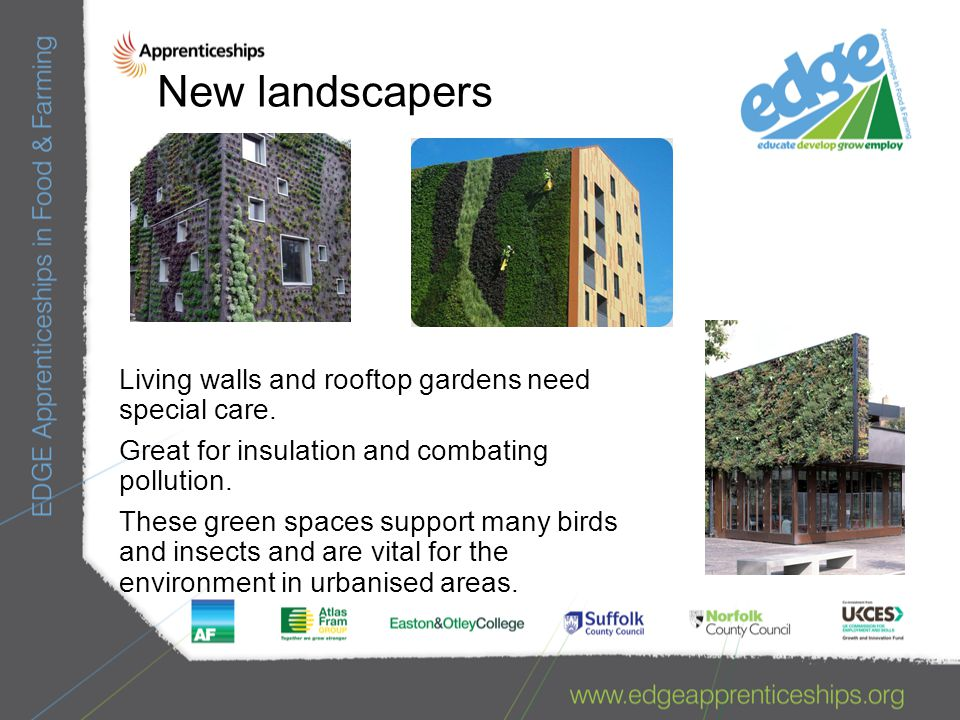 New landscapers Living walls and rooftop gardens need special care.