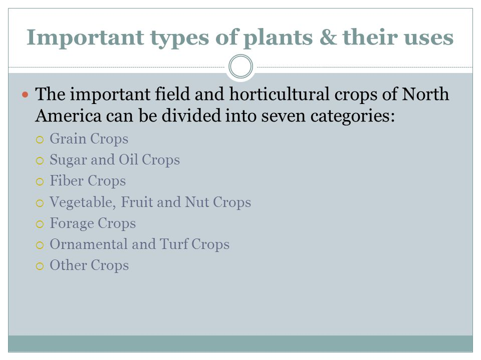 Important types of plants & their uses The important field and horticultural crops of North America can be divided into seven categories:  Grain Crop