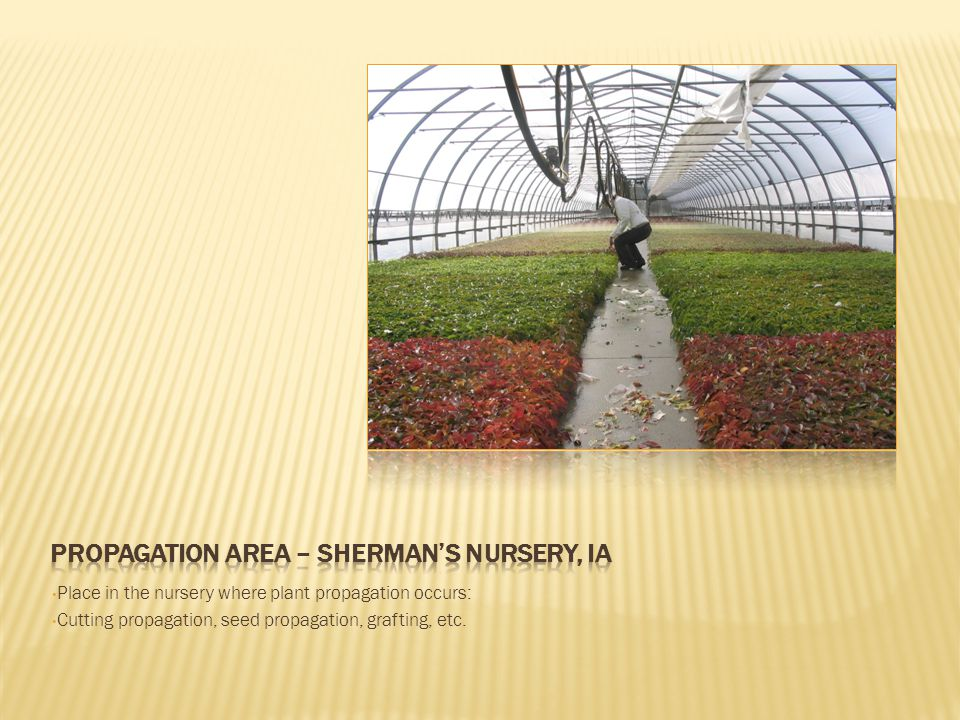 Place in the nursery where plant propagation occurs: Cutting propagation, seed propagation, grafting, etc.