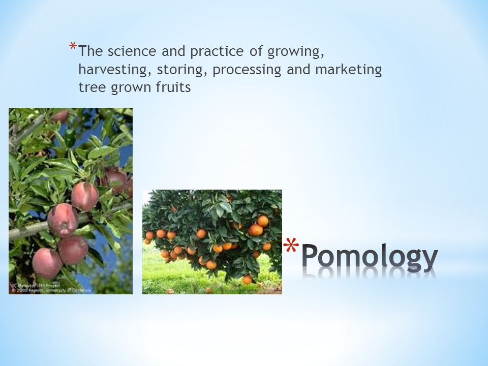 * The science and practice of growing, harvesting, storing, processing and marketing tree grown fruits