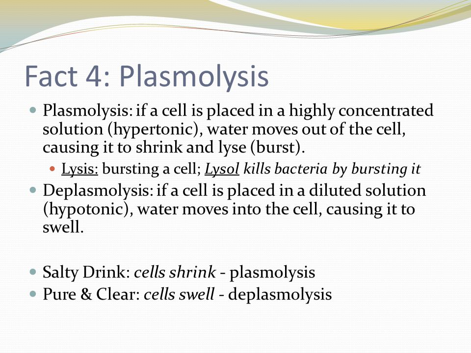 Fact 4: Plasmolysis Plasmolysis: if a cell is placed in a highly concentrated solution (hypertonic), water moves out of the cell, causing it to shrink and lyse (burst).