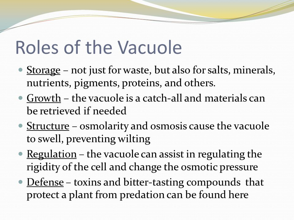 Roles of the Vacuole Storage – not just for waste, but also for salts, minerals, nutrients, pigments, proteins, and others.