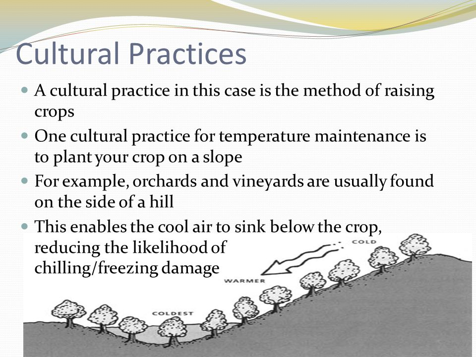 Cultural Practices A cultural practice in this case is the method of raising crops One cultural practice for temperature maintenance is to plant your crop on a slope For example, orchards and vineyards are usually found on the side of a hill This enables the cool air to sink below the crop, reducing the likelihood of chilling/freezing damage