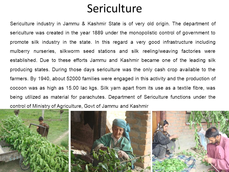 2 Sericulture industry in Jammu & Kashmir State is of very old origin. The department of sericulture was created in the year 1889 under the monopolist