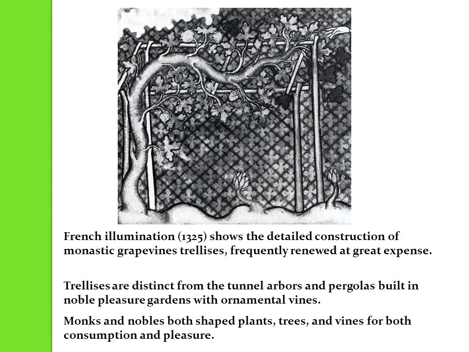 French illumination (1325) shows the detailed construction of monastic grapevines trellises, frequently renewed at great expense.