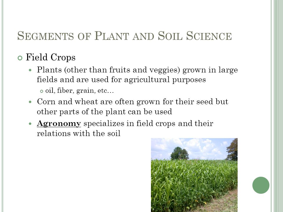 S EGMENTS OF P LANT AND S OIL S CIENCE Field Crops Plants (other than fruits and veggies) grown in large fields and are used for agricultural purposes oil, fiber, grain, etc… Corn and wheat are often grown for their seed but other parts of the plant can be used Agronomy specializes in field crops and their relations with the soil