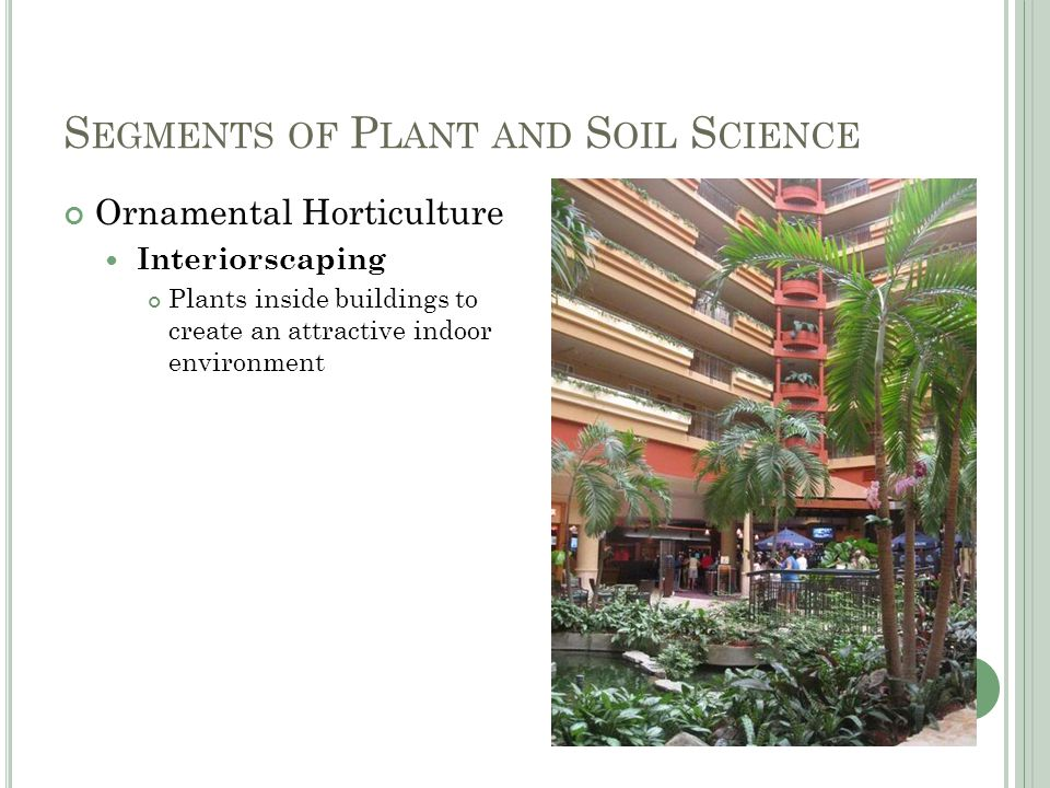 S EGMENTS OF P LANT AND S OIL S CIENCE Ornamental Horticulture Interiorscaping Plants inside buildings to create an attractive indoor environment