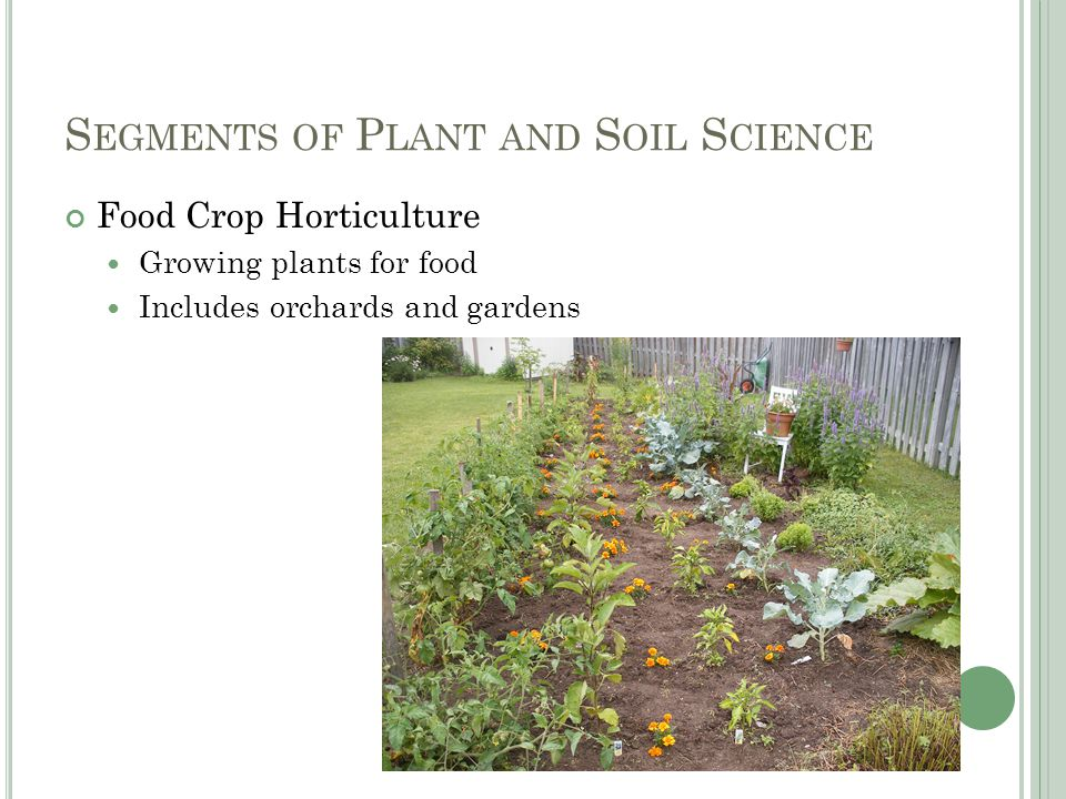 S EGMENTS OF P LANT AND S OIL S CIENCE Food Crop Horticulture Growing plants for food Includes orchards and gardens