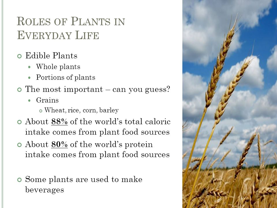 R OLES OF P LANTS IN E VERYDAY L IFE Edible Plants Whole plants Portions of plants The most important – can you guess.