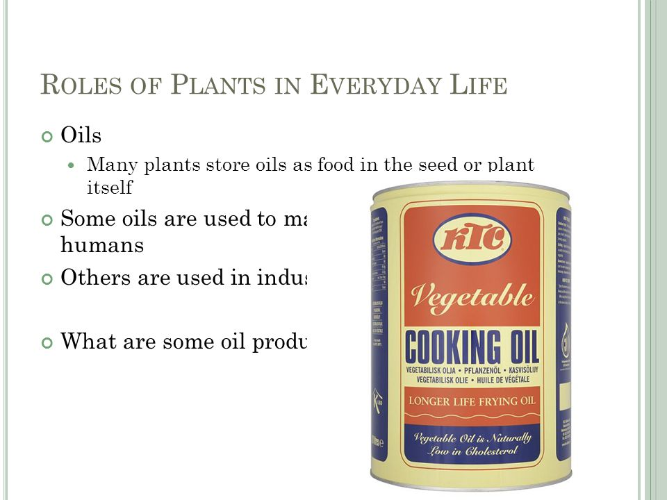 R OLES OF P LANTS IN E VERYDAY L IFE Oils Many plants store oils as food in the seed or plant itself Some oils are used to make or produce food for humans Others are used in industry What are some oil producing plants?