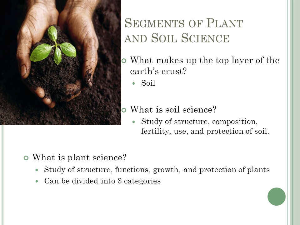 T YPES OF P LANTS AND T HEIR U SES Very few wild plants play an important role in everyday life Plant Domestication is removing plants from their native environment and growing them under controlled conditions