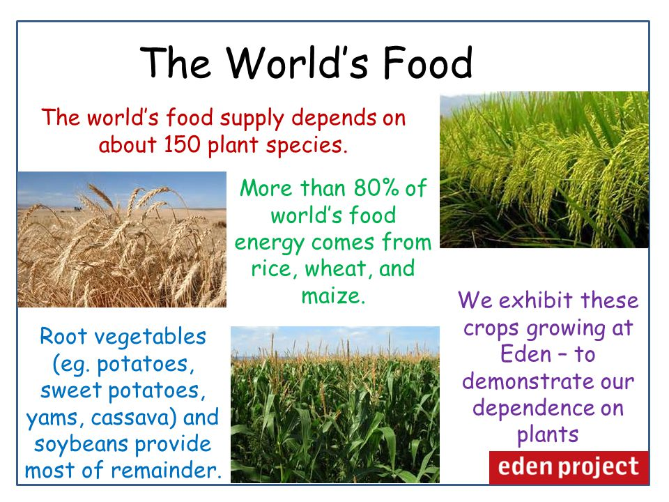The World's Food The world's food supply depends on about 150 plant species.
