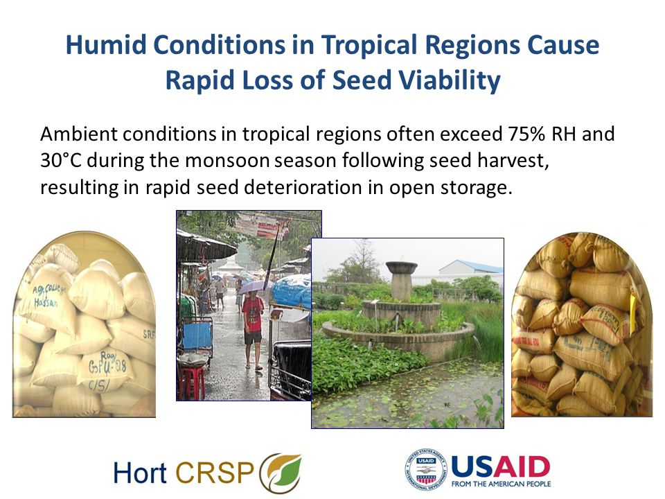 Humid Conditions in Tropical Regions Cause Rapid Loss of Seed Viability Ambient conditions in tropical regions often exceed 75% RH and 30°C during the monsoon season following seed harvest, resulting in rapid seed deterioration in open storage.