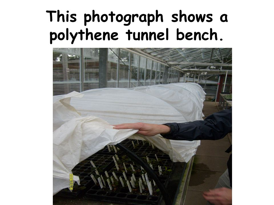 This photograph shows the heating mat used to provide bottom heat for propagation.