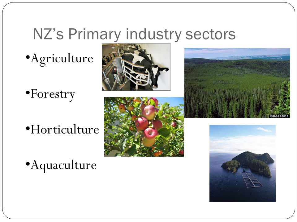 NZ's Primary industry sectors Agriculture Forestry Horticulture Aquaculture