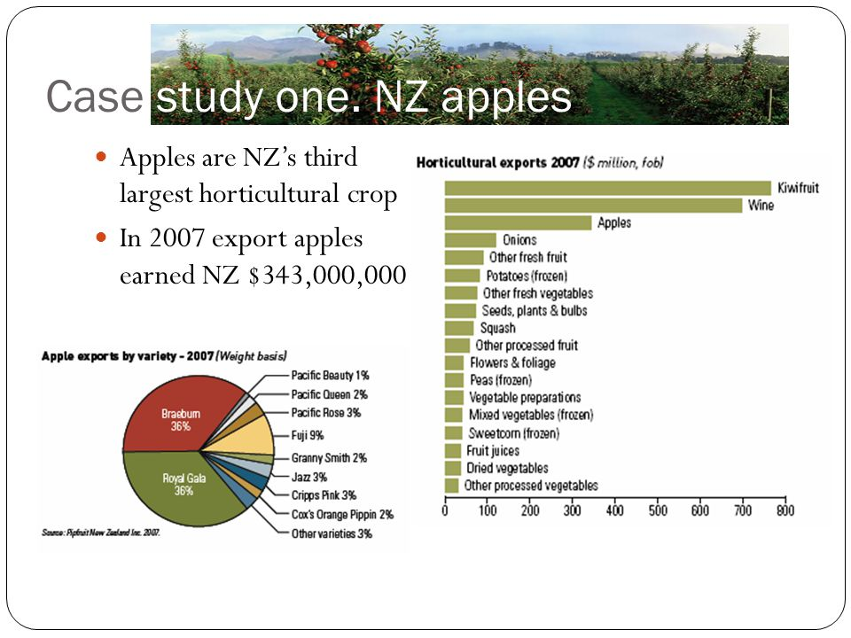 Case study one. NZ apples Apples are NZ's third largest horticultural crop In 2007 export apples earned NZ $343,000,000