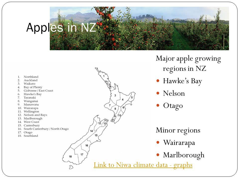 Apples in NZ Major apple growing regions in NZ Hawke's Bay Nelson Otago Minor regions Wairarapa Marlborough Link to Niwa climate data - graphs