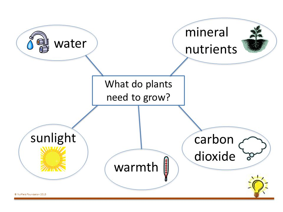 © Nuffield Foundation 2013 What do plants need to grow.