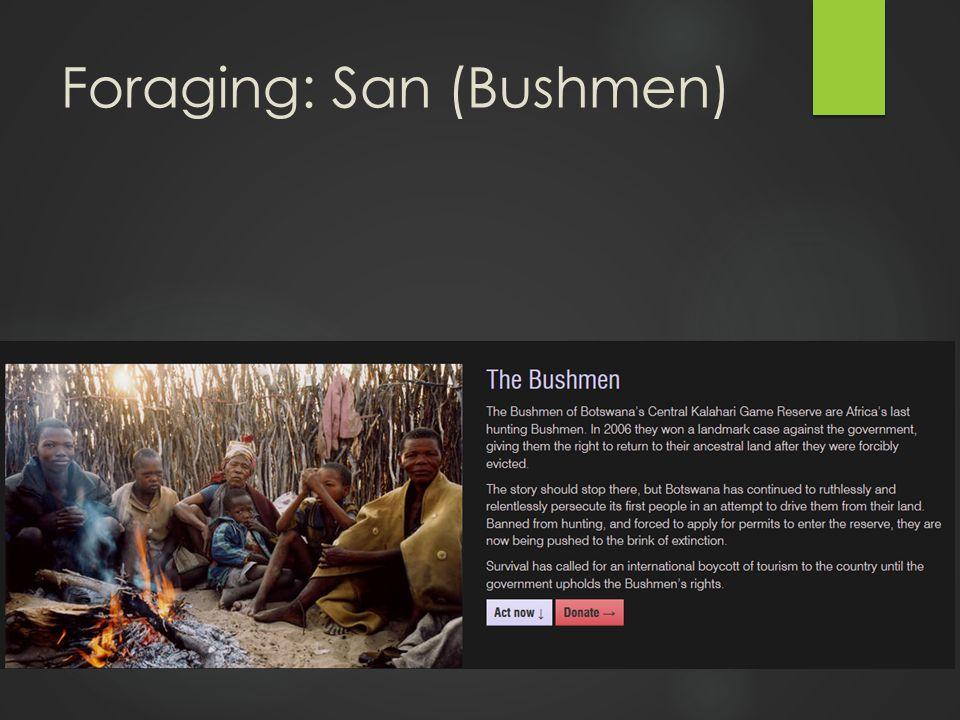 Foraging: San (Bushmen)
